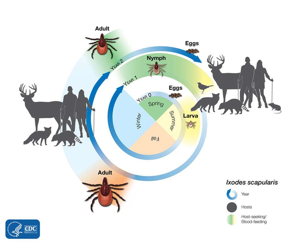 How ticks spread disease | Ticks | CDC